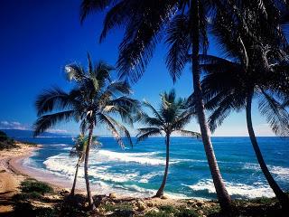 Deze afbeelding heeft een leeg alt-attribuut; de bestandsnaam is hawaii-beach-safety.jpg